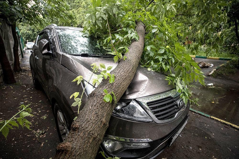 Кто должен отвечать, если на машину во дворе упало дерево ...