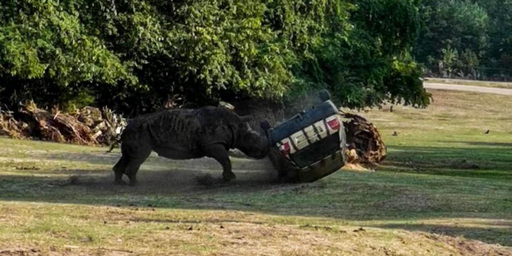 Видео: разъяренный носорог уничтожает машину работницы сафари ...
