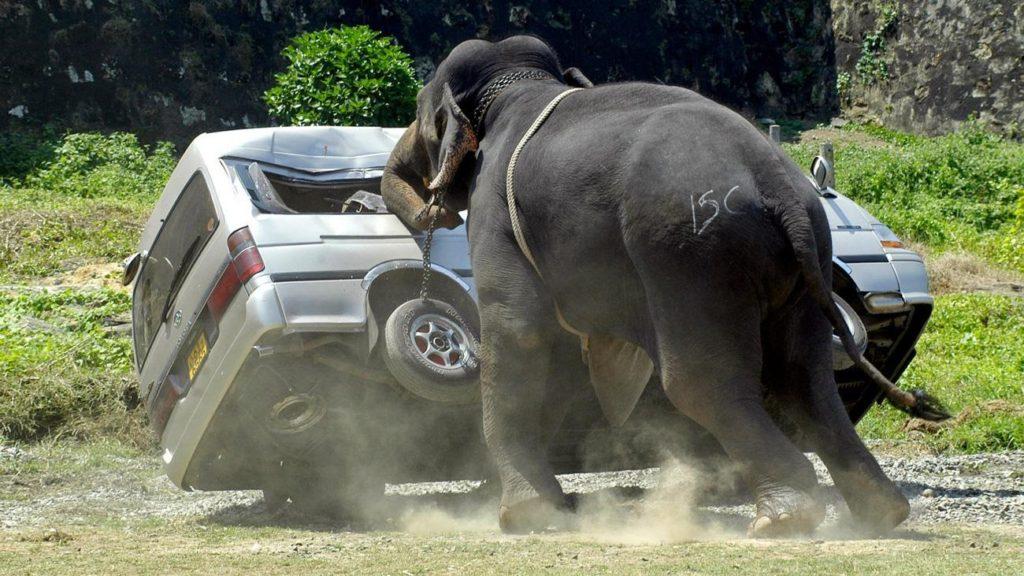 Не буди зверя: 10 примеров того, что животные способны сделать с ...